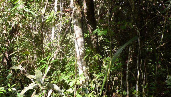 La deforestación del Amazonas aumentó un 467% en octubre - Sputnik Mundo